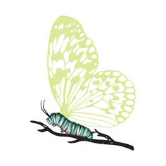 Watch the Caterpillar with Reveal Glow-in-the-Dark Butterfly Temporary Tattoo transform right before your eyes. When the lights go out the caterpillar evolves into a beautiful glowing butterfly. New Tattoos, Small Tattoos, Tatoos, Caterpillar Tattoo, Spinal Tattoo, Piercing Tattoo, Piercings, Bug Tattoo, Dark Tattoo