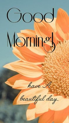 Good Morning Wishes Friends, Happy Good Morning Quotes, Good Morning Gif, Morning Blessings, Good Morning Messages, Morning Msg, Good Morning Beautiful Flowers, Good Morning Images Flowers, Good Morning Beautiful Quotes