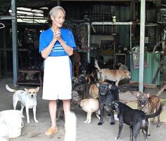 Lin Chi-chang with 200 dogs at the Lin A Po shelter, Aug. 25. (File photo courtesy of the Animal Rescue Team Taiwan)