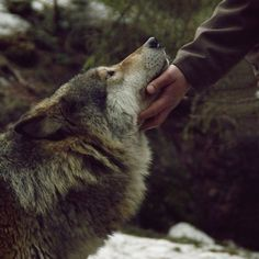 Image about beauty in Wolf 🐺 by Manuela Micu on We Heart It House Stark, Story Inspiration, Character Inspiration, Writing Inspiration, Hawke Dragon Age, Yennefer Of Vengerberg, Aesthetic Boy, Artemis Aesthetic, Aesthetic Black