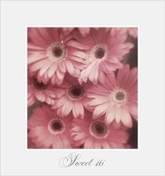 Pink flower..soft pink gerbera