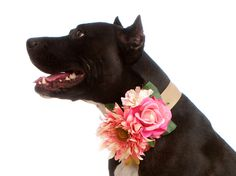 For my Ellie Girl <3  DELUXE CUSTOM Floral & Satin Wedding Flower Dog Collar Corsage- Choose your Colors (Wedding Pet Acccessories). $52.00, via Etsy.
