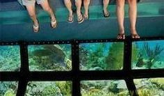 A glass bottom boat tour is one way to see incredible #sealife in #keywest