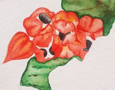 Guaraná - watercolor