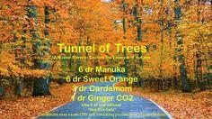 Tunnel of trees diffuser blend: manuka, orange, cardamom, ginger essential oils