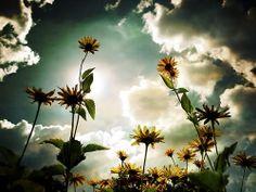 Daisy sky.