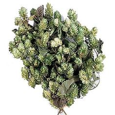 Gate City, Branch Decor, Dried Flowers, Preserves, Wedding Flowers, Herbs, Floral, Green, Crafts
