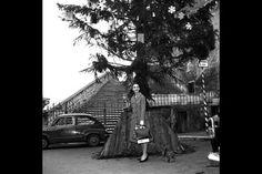 Photos of Vintage Style Icons During Christmas - Audrey Hepburn, Marilyn Monroe, Elizabeth Taylor Photos