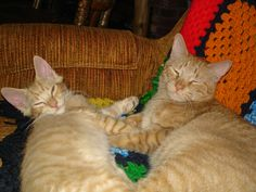 """I think my original title for this was """"A Study in Orange."""" Here's a young William (who has kind of taken the role of Top Pet) and Mikey. William fit into the pet family faster than any new pet we've ever had."""