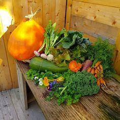 Nous sommes le 22 novembre 2020 et voici ma récolte du jour !! Une récolte encore fleurie malgré les températures qui ont chuté ces derniers temps. Mais dans l'ensemble, novembre fut très doux. Une belle inspirtaion gourmande pour préparer de bons petits plats #sansgluten #sanslactose !! A retrouver sur mon blog : Ma Cuisine a du sens Permaculture, Sans Gluten Sans Lactose, Voici, Carrots, Pumpkin, Vegetables, Food, Gluten Free Cooking, Cooking Recipes