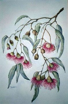 watercolor paintings of australian flowers Australian Wildflowers, Australian Native Flowers, Watercolor Projects, Watercolor Paintings, Watercolours, Native Drawings, Art Drawings, Botanical Drawings, Botanical Prints