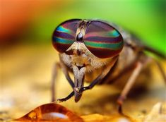 Photographer Thomas Shahan specializes in spectacular portraits of insects and arachnids, taken very up close and personal.