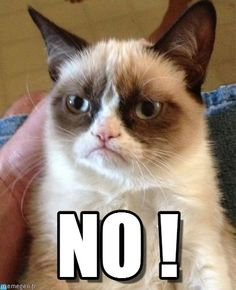 Grumpy Cat : No ! - by Anonymous