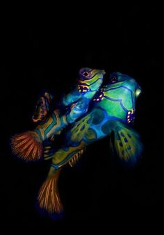 Mandarin fish - beautiful, but don't compete for food well.
