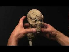 ▶ Sculpting a Human Skull in Clay_part-1 - YouTube