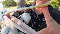 Pelican caught in fishing line hid an even sadder secret inside her body! For the love of animals. Pass it on.