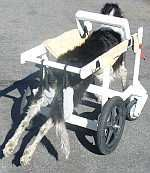 dog handicap sling | ... sling for medium to extra large dogs. Cost to build is about USD 100