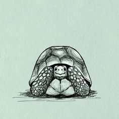 Yellow-footed Tortoise by Abigail Anklam Tortoise Drawing, Tortoise Tattoo, Animal Drawings, Art Drawings, Red Footed Tortoise, Turtle Time, Sulcata Tortoise, Cute Turtles, Tortoises