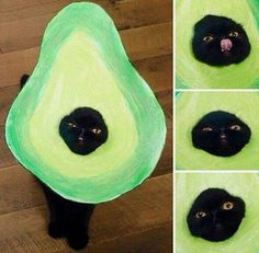 Oh My God... Its an Avo-cat-o