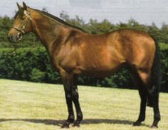 Criminal Type(1985)Alydar- Klepto By No Robbery. 5x5 To Bull Lea And Beau Pere. Champion Older Horse And Horse Of The Year In 1990 After Beating Easy Goer In The Met Mile And Sunday Silence In The Hollywood Gold Cup. 24 Starts 10 WIns 5 Seconds 3 Thirds. $2,351,817.