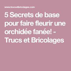5 Secrets de base pour faire fleurir une orchidée fanée! - Trucs et Bricolages