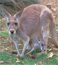 http://www.bing.com/images/search?q=Wildlife Conservancy of Adelaide Australia