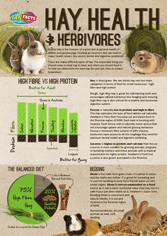 Hay, Health and Herbivores Quality hay is the linchpin of a good diet & general health in rabbits and guinea pigs. Feeding an incorrect diet can lead to major health issues, like severe dental and digestive problems! Contact the Vetafarm team for more info! www.vetafarm.com.au