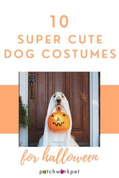 With Halloween just around the corner, we wanted to help you start brainstorming the best dog halloween costumes for 2020. From funny dog costumes to spider costumes, large dog costumes to puppy costumes, there is something for every pup.There are so many fun new ways to dress up this year, mostly involving funny quarantine puns, but we decided to showcase a few classics as well as a few new ones to 2020. #dogcostume #howloween #funnydogs #cutedogs #dogmeme | dress up your dog | Cute Dog Halloween Costumes, Large Dog Costumes, Cute Dog Toys, Friend Costumes, Super Cute Dogs, Puppy Costume, Diy Dog Treats, Your Dog