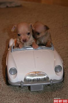 PSSST   Hey baby, where you wanna go? puppies!-driving toy car.
