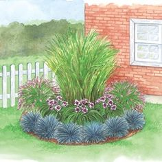 Corner Grass Garden: Create a sense of beauty and movement in your landscape with our professionally designed Corner Grass Garden. Zebra Grass provides the central focus, supported by Rose Fountain Grasses on either side. Daring Dilemma Daylilies and Blue Festuca Grass introduce colorful highlights that complete this low-maintenance garden.