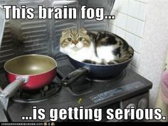 @Linda Bruinenberg Harris @Beth J C  This Brain Fog... is getting serious