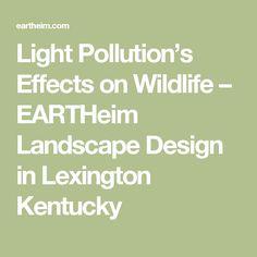 Light Pollution's Effects on Wildlife – EARTHeim Landscape Design in Lexington Kentucky