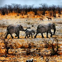The family, Namibia, Africa Elephant Family, Baby Elephant, Ivory Trade, Circle Of Life, African Animals, Travel Planner, Rest Of The World, Fauna, Science And Nature