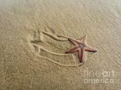 Starfish on the Beach by Debra Martz www.debramartz.com