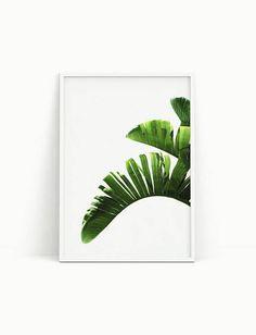 Banana leaf print Palm leaf Botanical print Banana plant    Wall decor