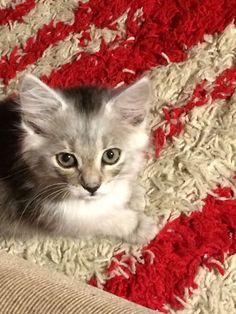 Ellie, my girlfriend's cat.