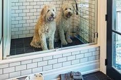 dog washing station in laundry room \ dog washing station in laundry room ; dog washing station in laundry room diy ; dog washing station in laundry room pets Dog Washing Station, Dog Station, Cat Feeding Station, Laundry Station, Dog Rooms, Rooms For Dogs, Dog Shower, Shower Floor, Bath Shower