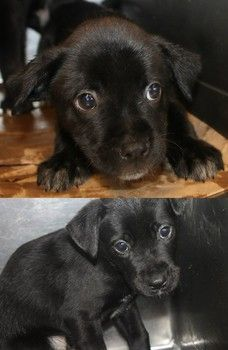 PLEASE HELP...OUT OF TIME!!!The Ivory family: Sweet retriever mix pups out of time at high-kill SC shelter