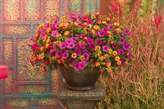Bright, bold, hot colors really catch the eye in this combination called 'Caribb. - Bright, bold, hot colors really catch the eye in this combination called 'Caribbean Day' - Container Flowers, Flower Planters, Container Plants, Container Gardening, Gardening Hacks, Succulent Containers, Large Planters, Gardening Supplies, Outdoor Pots
