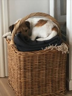 Animals And Pets, Cute Animals, Dog Corner, Parson Russell Terrier, Diy Dog Bed, Jack Russells, Sleeping Dogs, Fox Terrier, Animal House