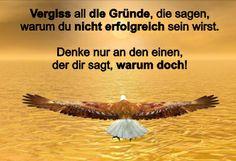 Roman schreiben lernen: www.rindlerwahn.de