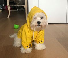 Our Top Selling Talon raincoat is both stylish and practical. New Twilight, Knit Dog Sweater, Dog Raincoat, Brussels Griffon, Waterproof Coat, Poodle Mix, Dog Hoodie, Goldendoodle, Dog Accessories