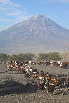Pastoral landscape and Mt. Kilimanjaro, Kenya-Tanzania