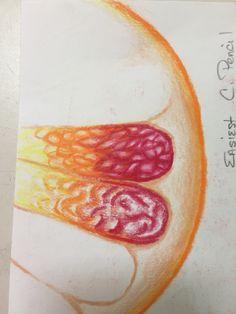 C.Pencil Grapefruit 5-9-16