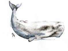 sperm whale love