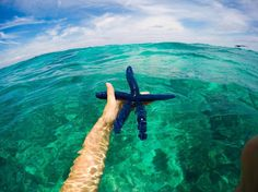 Come find your STAR at Beachcomber Island Fiji #beachcomberislandfiji #star #paradise #island #mamanucaislands #fiji http://www.beachcomberfiji.com/