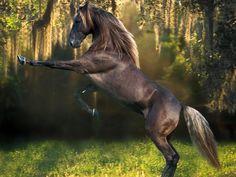 Un cheval type café au lait qui se cabre dans un bois
