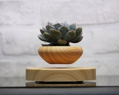 It adds a sense of elegance and makes your indoor plant pot look more visually pleasing.