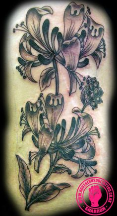 honeysuckle tattoo on pinterest tattoos and body art hummingbird tattoo and month flowers. Black Bedroom Furniture Sets. Home Design Ideas