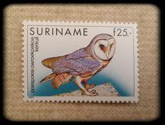 Barnowl postagestamp, Suriname.